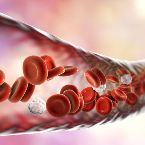 כלי דם
