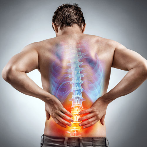 עמוד שדרה / שרירים