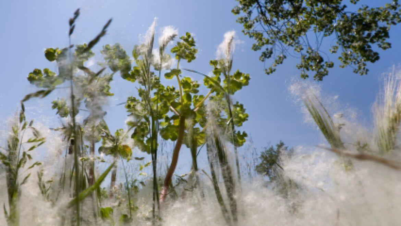 כיצד להתמודד עם אלרגיה